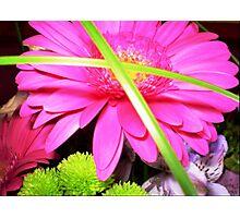 Gerbera in Bouquet Photographic Print