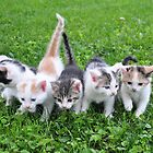 Five little kittens by mltrue