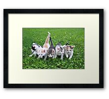 Five little kittens Framed Print
