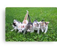 Five little kittens Canvas Print