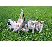 Five little kittens Photographic Print