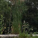 grass on roof by Charlie Mclenahan