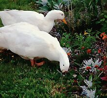 Ducks in the Garden at the Shipwright's Café by RC deWinter