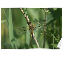 Yellow Dragon Fly Poster