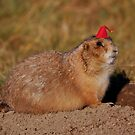 Do You Like My Hat? by Larry Trupp