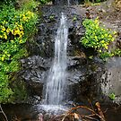 Little Waterfall by George I. Davidson