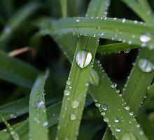 Rain Drops by sternbergimages