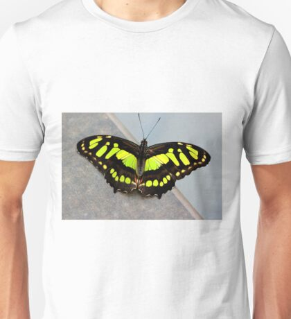 Siproeta Stelenes (Malachite) Unisex T-Shirt