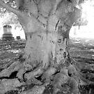 Root Tree by Debbie Robbins