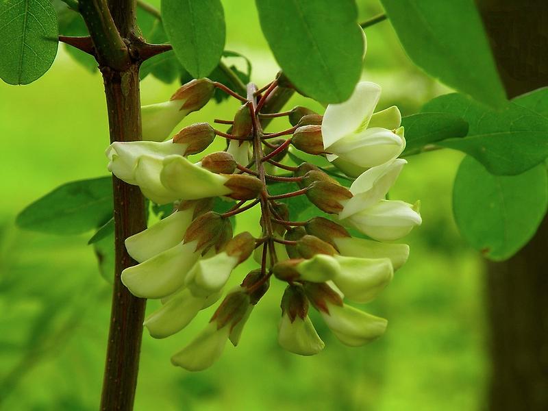 Expresión de una flor....... by cieloverde