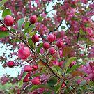 Pink Buds by Linda Miller Gesualdo