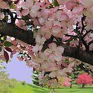 Blossoms In Pink by Linda Miller Gesualdo