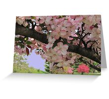 Blossoms In Pink Greeting Card