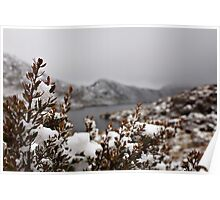 Walking in a Winter Wonderland_Cradle Mountain Poster