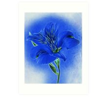 ~ Blue Lily ~ Art Print
