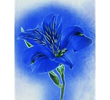 ~ Blue Lily ~ Photographic Print