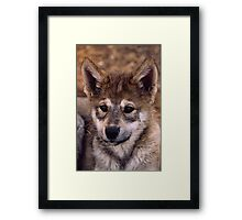 Alaskan Timber Wolf Cub Framed Print