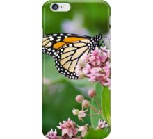 Monarch Butterfly on Milkweed Flower iPhone Case/Skin