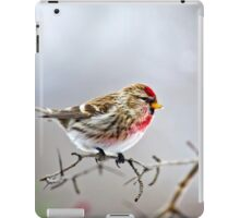 Winter Bird Common Redpoll iPad Case/Skin