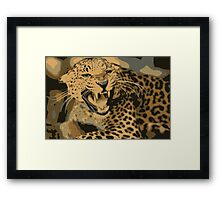 Wild leopard in 7 colors Framed Print