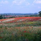 Poppy field, West Midlands, England (view larger for best effect) by hjaynefoster