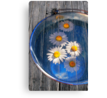 Daisies and water Canvas Print