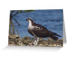 Osprey on an Oysterbar Greeting Card