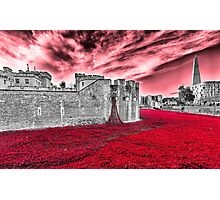 Poppies At The Tower - the very sky weeps Photographic Print