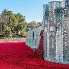 Cascading Poppies, Tower of London by Graham Prentice