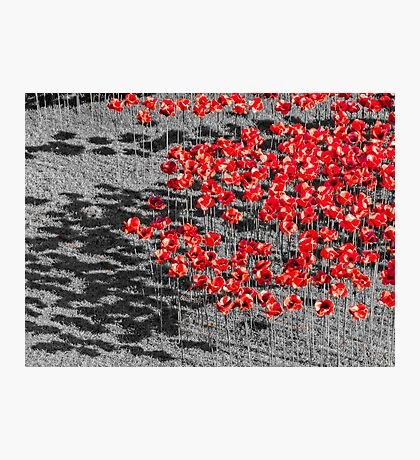 Poppies For The Fallen Photographic Print