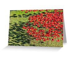 Poppies For The Fallen Greeting Card