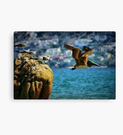 Where Do You think He's Going? Canvas Print