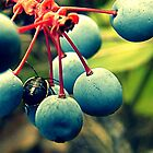 Beatle Amongst the Berries by eleveneleven