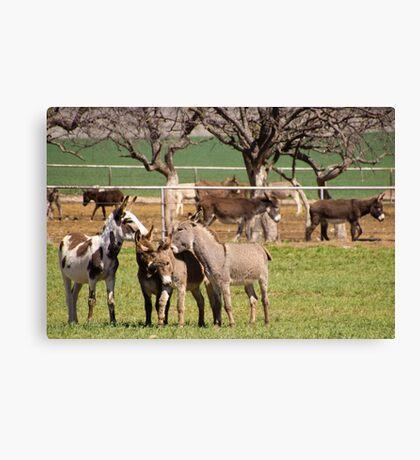 Donkey Rescue Canvas Print