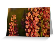 Hot Pink Lupines From My Mother's Garden - Take 2 Greeting Card
