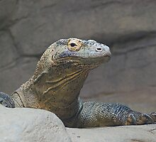 In the Pool - Komodo Dragon by Kathy Newton