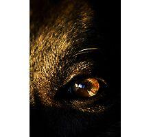 Soul of Dog Photographic Print