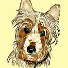 Jack the silky terrier by Trish Loader