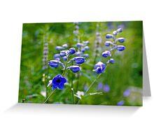 Creeping Bellflowers - Campanula rapunculoides Greeting Card