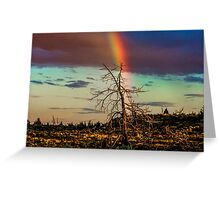 Rainbows-n-old Juniper Greeting Card