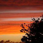 Sunset, Auckland, New Zealand by Amaterasu