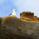 The Lookout  by heatherfriedman