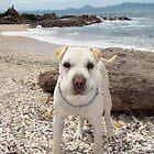 Dog's Day at the Beach, Waipu Cove, Northland, New Zealand by Amaterasu