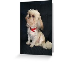 The Red Collar Greeting Card