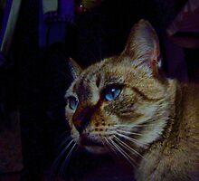 "Witch's Cat by Antonello Incagnone ""incant"""