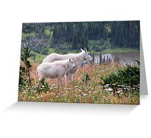 Mountain Goats at Hidden Lake Greeting Card
