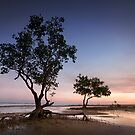 Mangroves. by DaveBassett