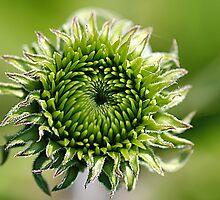 Green. by Hetty Mellink