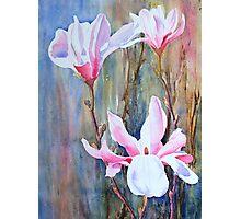 Magnolias Photographic Print