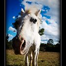 Horse by AdamR
